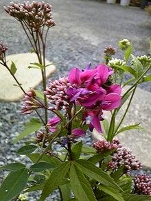 咲結salyu(サリュウ)~お花から始まる笑顔の時間~ フラワーアレンジメントスクール IN 島田市-090923_162019.jpg