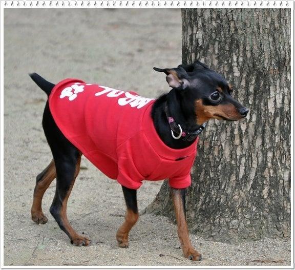 Hearty&Resty♪...feat.Nera♪ ~心優しい犬の癒し♪~ from 滋賀びわ湖