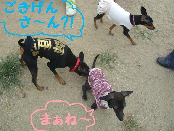 なかよし☆RCS【RUSK☆&Chocolat★&Soleil♪】