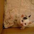 子猫の里親探していま…