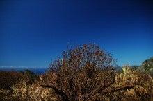 小笠原父島エコツアー情報    エコツーリズムの島        小笠原の旅情報と父島の自然-台風後