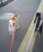 札幌のペットシッターの日常-2009092717260001.jpg