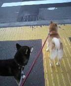 札幌のペットシッターの日常-2009092717240000.jpg