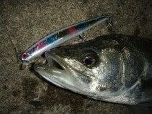 Fishing Blog OFFSHORE CRAZY! ~ 夢は一発大物!   鮪だ!鰤だ!大政だ!巨カンパだ!大鯛だ!なんでもこ~い!-123F