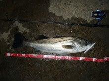 Fishing Blog OFFSHORE CRAZY! ~ 夢は一発大物!   鮪だ!鰤だ!大政だ!巨カンパだ!大鯛だ!なんでもこ~い!-70cm