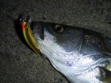 Fishing Blog OFFSHORE CRAZY! ~ 夢は一発大物!   鮪だ!鰤だ!大政だ!巨カンパだ!大鯛だ!なんでもこ~い!-ザブラ9F