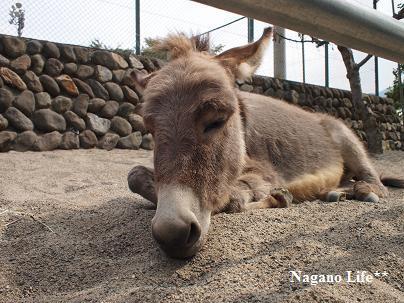 Nagano Life**-ロバ
