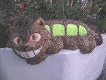 $ノーマ オフィシャルブログ「ノーマの遠吠え。」Powered by Ameba-猫バス