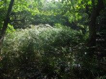 小笠原父島エコツアー情報    エコツーリズムの島        小笠原の旅情報と父島の自然-シュロガヤツリ