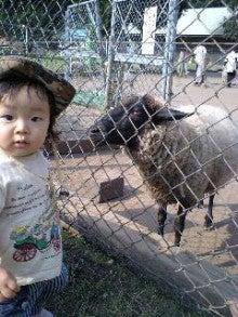毎日ちょっとずつ♪成長日記-羊さんと