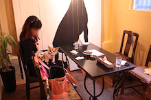 チワワのラテとココ わんぱく部屋