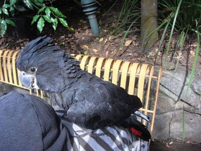 【たんぽぽの惑星】-BIG BIRD