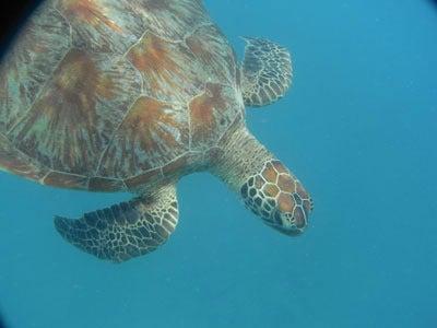 【たんぽぽの惑星】-turtle