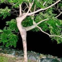 面白画像 自然の美術…