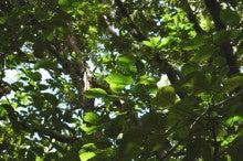 小笠原父島エコツアー情報    エコツーリズムの島        小笠原の旅情報と父島の自然-アカギ