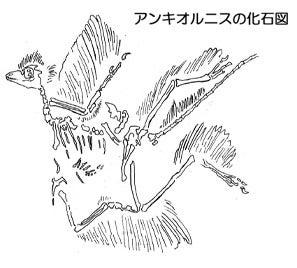 川崎悟司 オフィシャルブログ 古世界の住人 Powered by Ameba-アンキオルニスの化石図