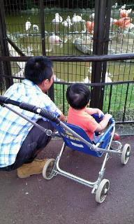 Grumpy Monkey(不機嫌なおさるさん)の観察日記-ohji zoo3