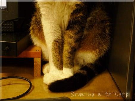 猫とお絵かき -Drawing with Cats☆