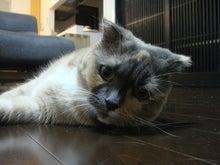 ☆猫まぜ☆-ナナ