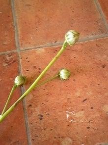 咲結salyu(サリュウ)~お花から始まる笑顔の時間~ フラワーアレンジメントスクール IN 島田市-091010_113026.jpg