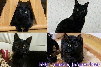 ~黒猫ティアラの楽しい毎日~-Tiara
