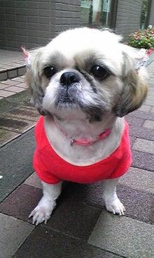 飼育放棄犬シーズー春香が教えてくれた、幸せな気持ちになる方法-090930_1209~03.jpg