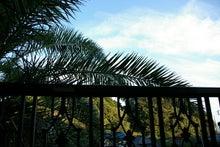 毎日はっぴぃ気分☆-南国チックな窓眺