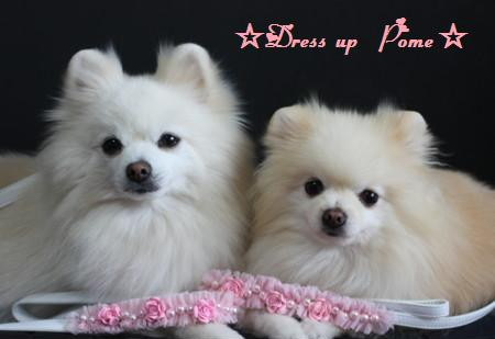 ☆Dress up Pome☆-LT200910233