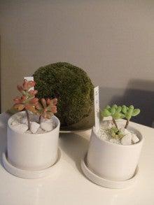 カルマンギアのある生活-多肉植物