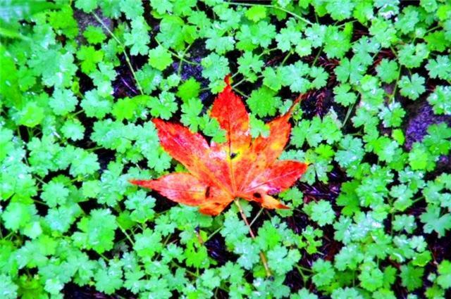 LIVE THE ROCK-leaf