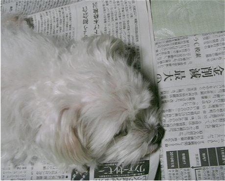 左脳右脳の補助脳-新聞犬