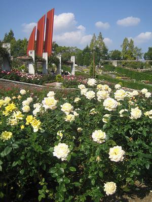 お気楽なワタシの日常-バラ園1