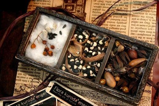 フローラのガーデニング・園芸作業日記-タネのコレクションBOX