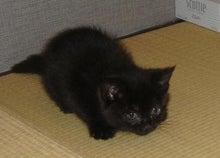☆猫まぜ☆-チビ黒