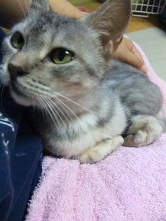 ずれずれブログ…湘南で猫と暮らせば…-SH3801460001.JPG