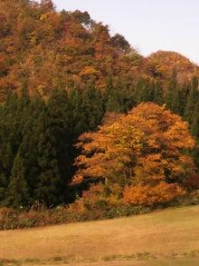 kintaちゃんのブログ-2009110108240001.jpg