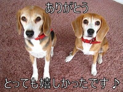 ザ☆ビーグルズ エディ&ルーシー-091109-1