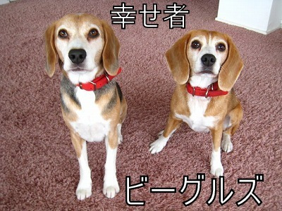 ザ☆ビーグルズ エディ&ルーシー-091109-14