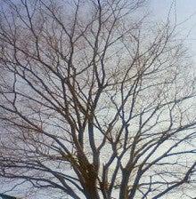 酒とホラの日々。-冬の木
