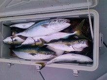 Fishing Blog OFFSHORE CRAZY! ~ 夢は一発大物!   鮪だ!鰤だ!大政だ!巨カンパだ!大鯛だ!なんでもこ~い!-クーラー