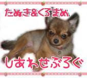 ☆MIX犬『たぬき姫&くろまめ王子』のしあわせぶろぐ☆