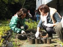緑化推進事業の活動報告-1107草抜き02