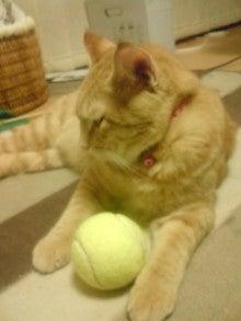 どたばたテニス日誌-081107_2137~01.jpg