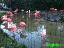 flighty life-zoo3