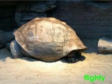 flighty life-zoo4