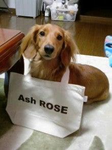 アッシュローズ公式ブログ-091119_2211~010001.jpg