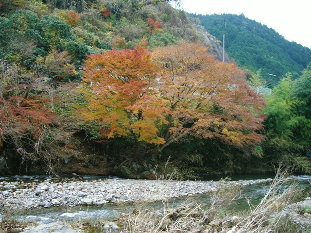 奈良民のブログ-周辺写真