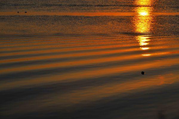 北海道の野生動植物写真-波紋