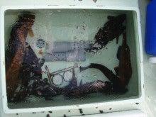 Fishing Blog OFFSHORE CRAZY! ~ 夢は一発大物!   鮪だ!鰤だ!大政だ!巨カンパだ!大鯛だ!なんでもこ~い!-生簀