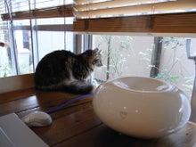 田口知子が日常をつづったブログ